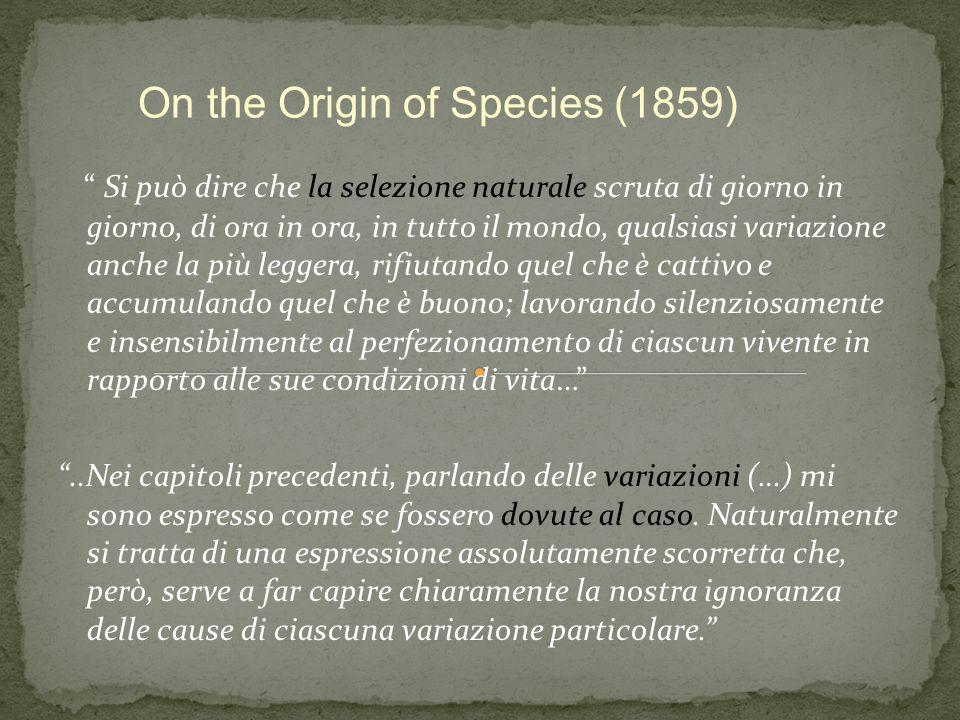 """"""" Si può dire che la selezione naturale scruta di giorno in giorno, di ora in ora, in tutto il mondo, qualsiasi variazione anche la più leggera, rifiu"""