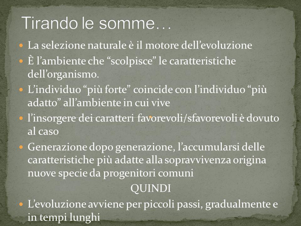 """La selezione naturale è il motore dell'evoluzione È l'ambiente che """"scolpisce"""" le caratteristiche dell'organismo. L'individuo """"più forte"""" coincide con"""