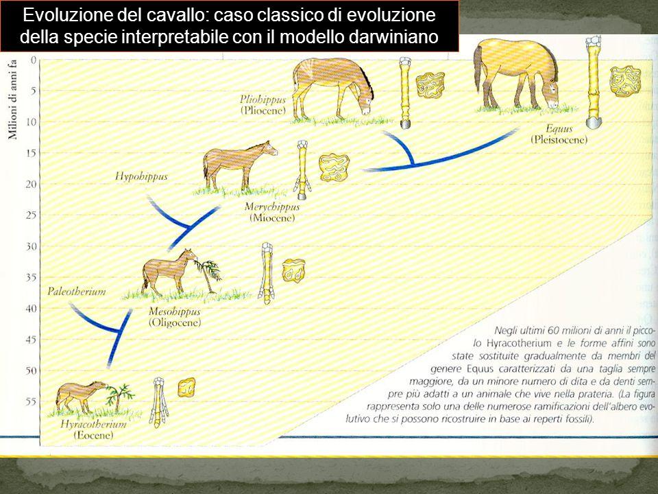 Evoluzione del cavallo: caso classico di evoluzione della specie interpretabile con il modello darwiniano