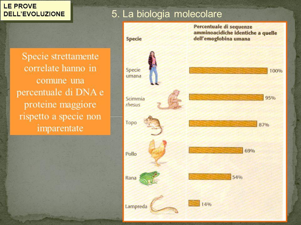 LE PROVE DELL'EVOLUZIONE 5. La biologia molecolare Specie strettamente correlate hanno in comune una percentuale di DNA e proteine maggiore rispetto a
