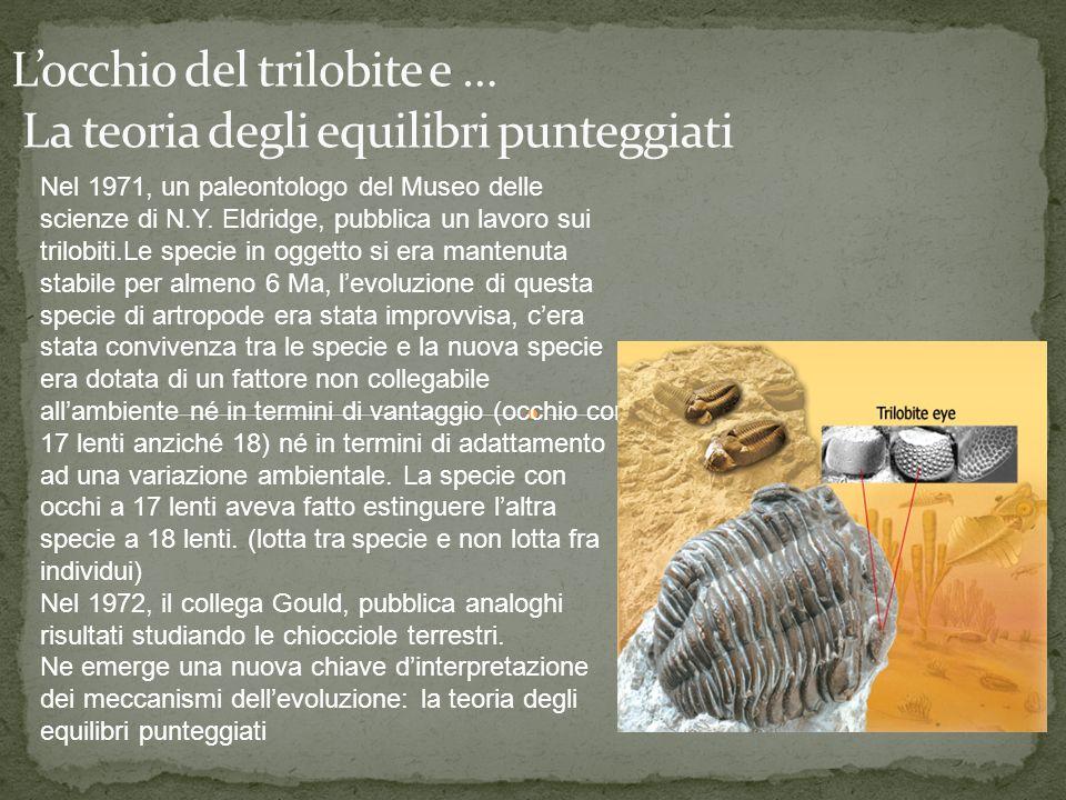 Nel 1971, un paleontologo del Museo delle scienze di N.Y. Eldridge, pubblica un lavoro sui trilobiti.Le specie in oggetto si era mantenuta stabile per