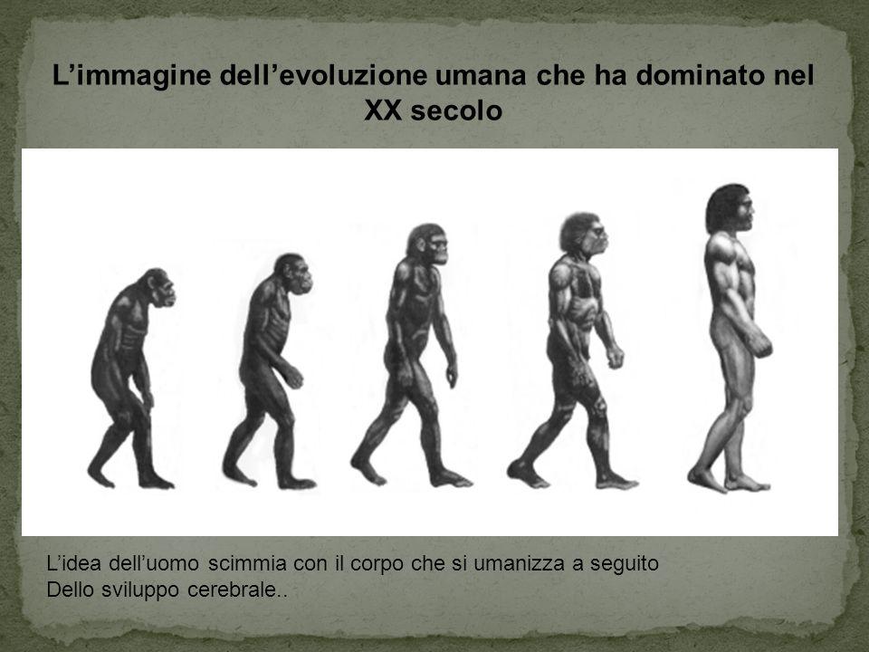 L'immagine dell'evoluzione umana che ha dominato nel XX secolo L'idea dell'uomo scimmia con il corpo che si umanizza a seguito Dello sviluppo cerebral