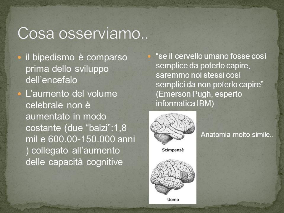 """il bipedismo è comparso prima dello sviluppo dell'encefalo L'aumento del volume celebrale non è aumentato in modo costante (due """"balzi"""":1,8 mil e 600."""