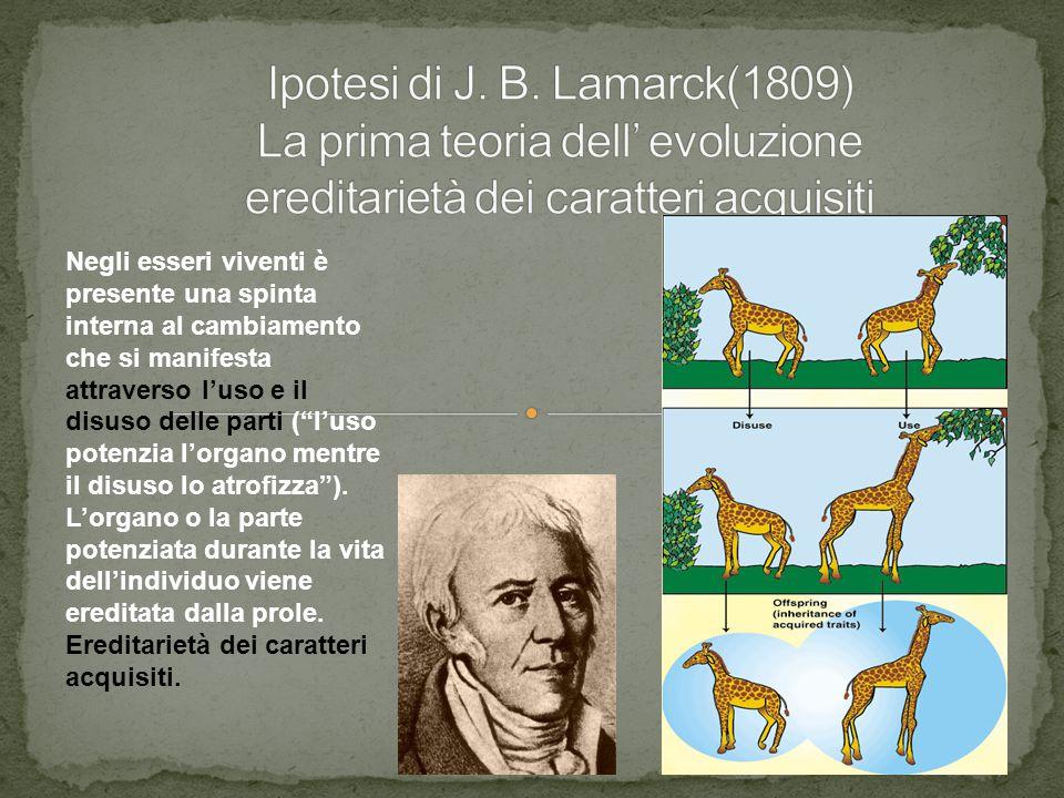 """Negli esseri viventi è presente una spinta interna al cambiamento che si manifesta attraverso l'uso e il disuso delle parti (""""l'uso potenzia l'organo"""
