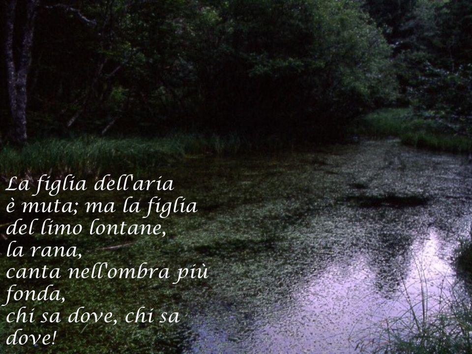 La figlia dell'aria è muta; ma la figlia del limo lontane, la rana, canta nell'ombra più fonda, chi sa dove, chi sa dove!
