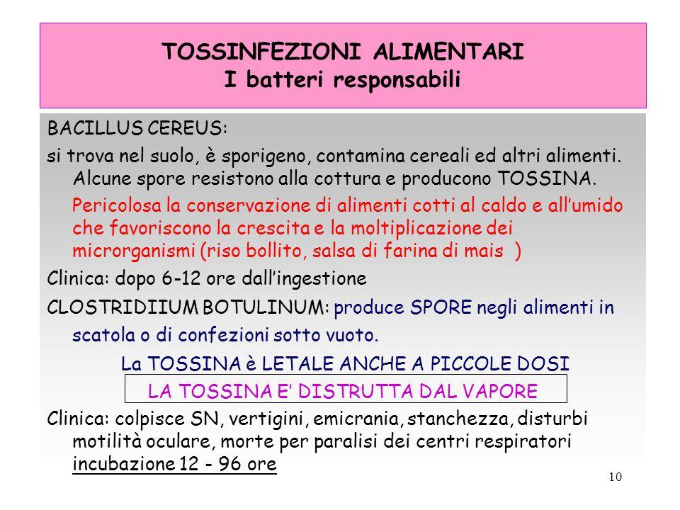 10 TOSSINFEZIONI ALIMENTARI I batteri responsabili BACILLUS CEREUS: si trova nel suolo, è sporigeno, contamina cereali ed altri alimenti. Alcune spore