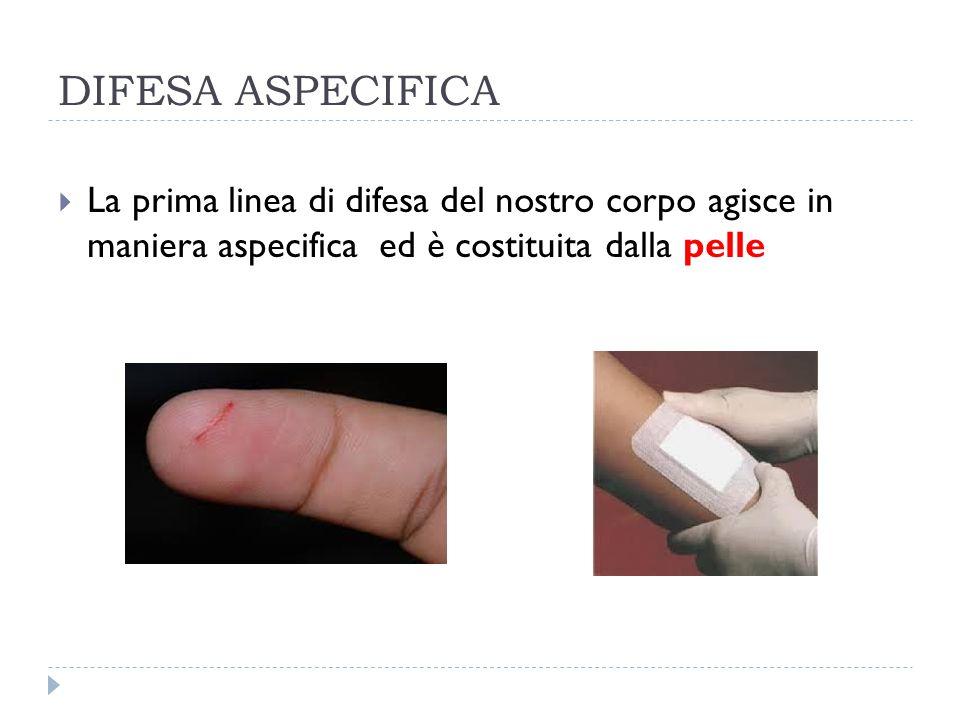 DIFESA ASPECIFICA  La prima linea di difesa del nostro corpo agisce in maniera aspecifica ed è costituita dalla pelle