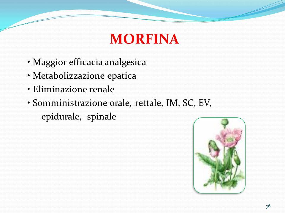 36 MORFINA Maggior efficacia analgesica Metabolizzazione epatica Eliminazione renale Somministrazione orale, rettale, IM, SC, EV, epidurale, spinale