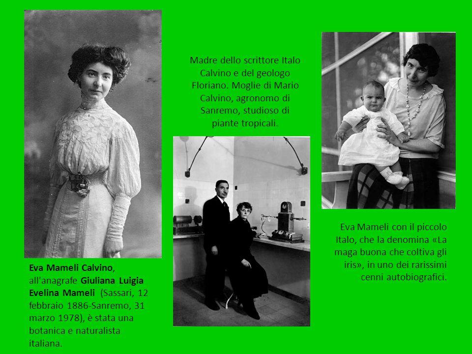 Eva Mameli Calvino, all'anagrafe Giuliana Luigia Evelina Mameli (Sassari, 12 febbraio 1886-Sanremo, 31 marzo 1978), è stata una botanica e naturalista