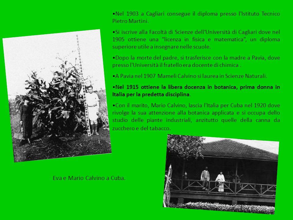 Nel 1903 a Cagliari consegue il diploma presso l'Istituto Tecnico Pietro Martini. Si iscrive alla Facoltà di Scienze dell'Università di Cagliari dove