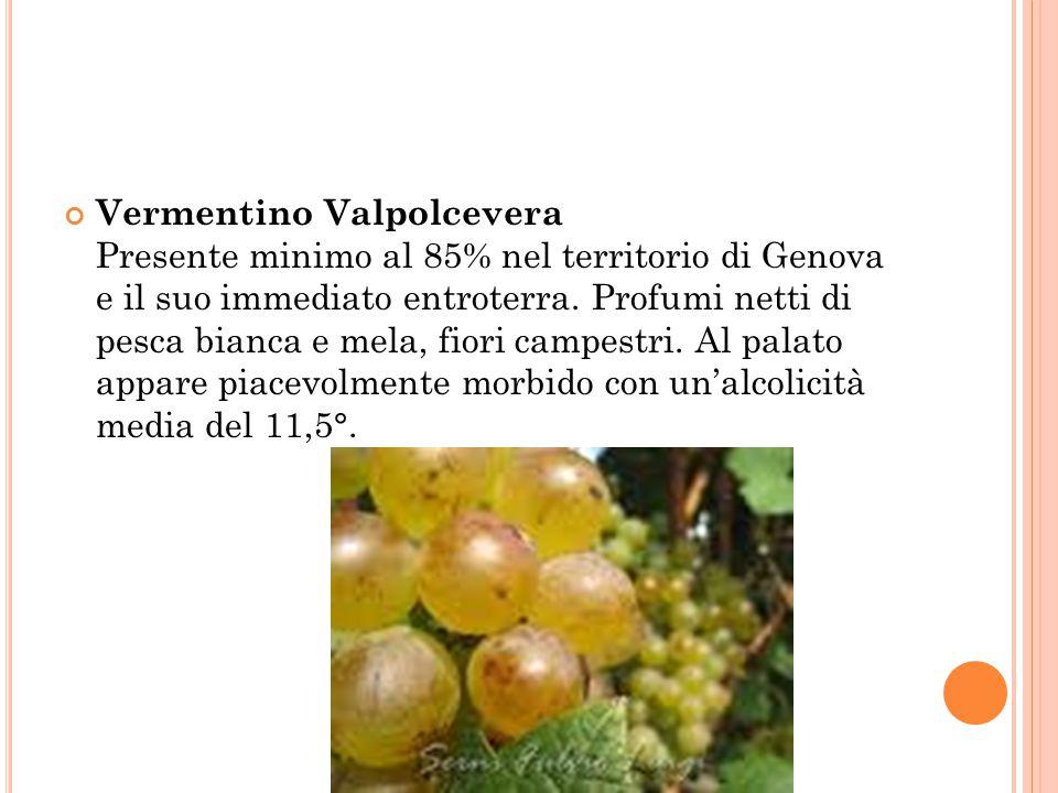 Vermentino Valpolcevera Presente minimo al 85% nel territorio di Genova e il suo immediato entroterra.