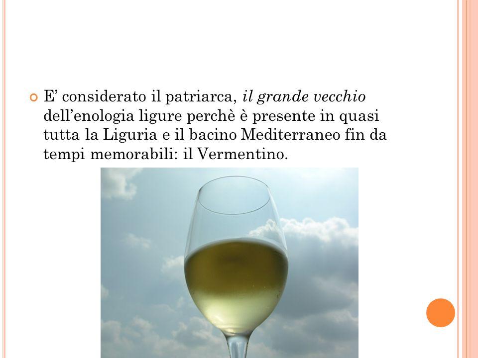 E' considerato il patriarca, il grande vecchio dell'enologia ligure perchè è presente in quasi tutta la Liguria e il bacino Mediterraneo fin da tempi memorabili: il Vermentino.