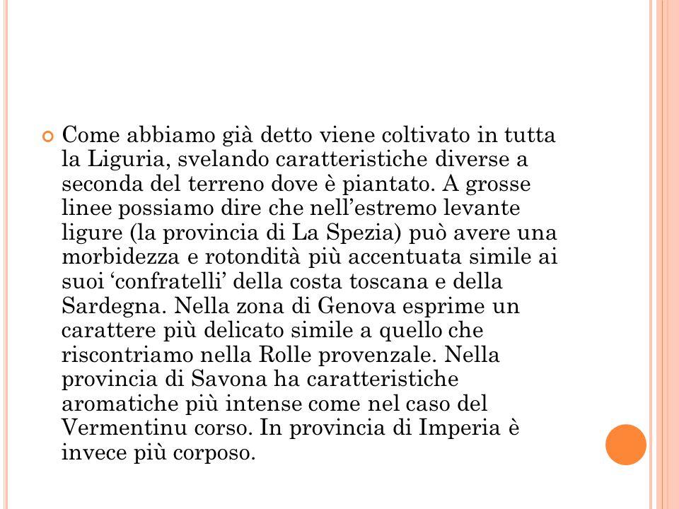 Come abbiamo già detto viene coltivato in tutta la Liguria, svelando caratteristiche diverse a seconda del terreno dove è piantato.