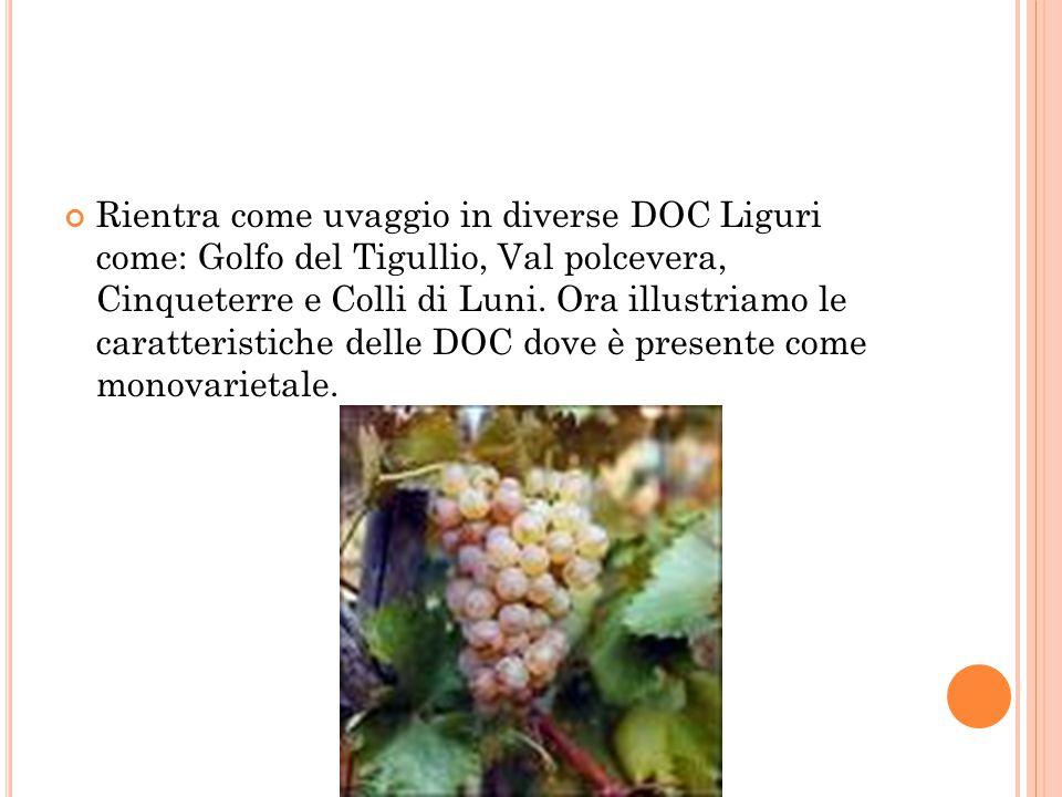 Rientra come uvaggio in diverse DOC Liguri come: Golfo del Tigullio, Val polcevera, Cinqueterre e Colli di Luni.