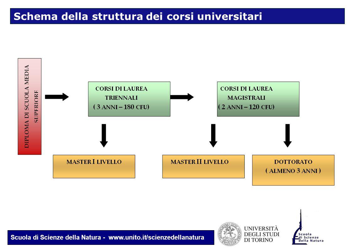 Scuola di Scienze della Natura - www.unito.it/scienzedellanatura Schema della struttura dei corsi universitari