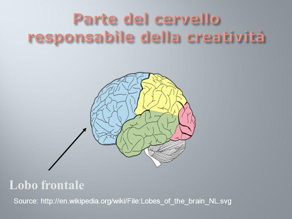 Lobo frontale Source: http://en.wikipedia.org/wiki/File:Lobes_of_the_brain_NL.svg