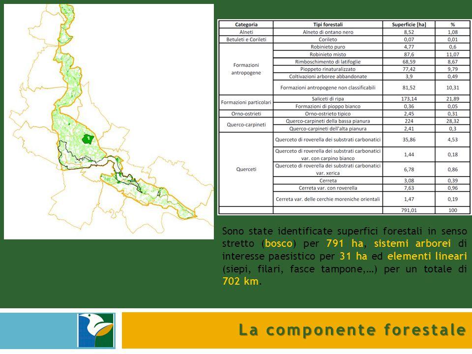 La componente forestale Sono state identificate superfici forestali in senso stretto (bosco) per 791 ha, sistemi arborei di interesse paesistico per 3