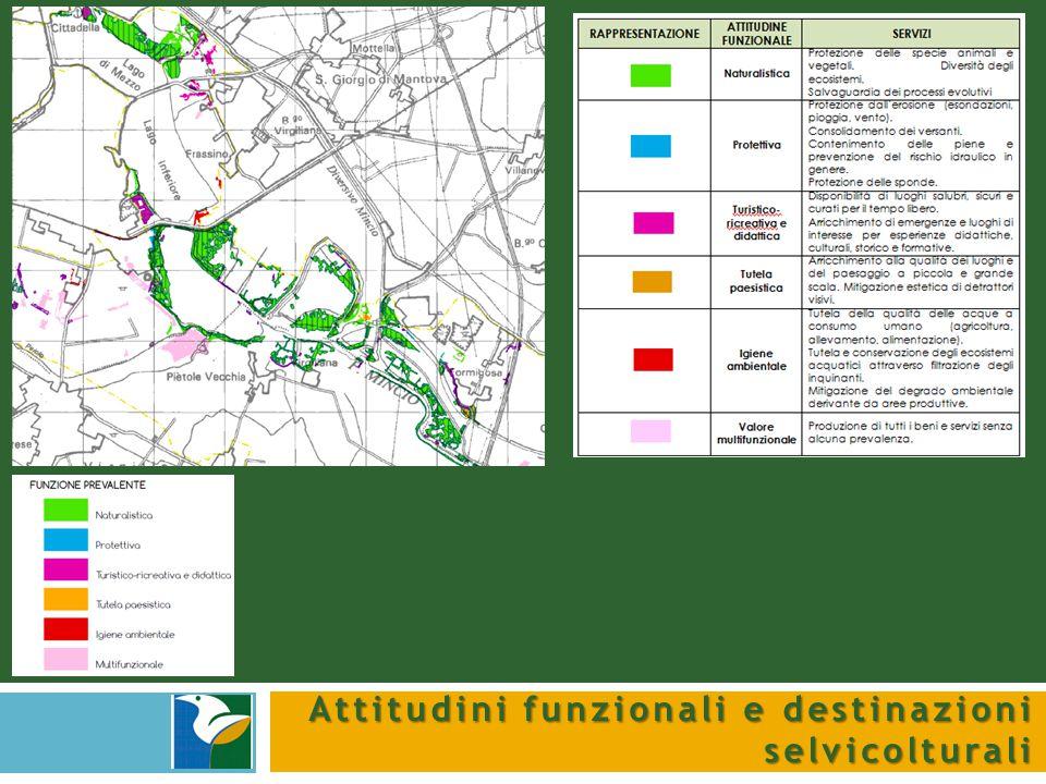 Interventi compensativi Gli interventi compensativi in aree con insufficiente coefficiente di boscosità si eseguono mediante nuovi imboschimenti.