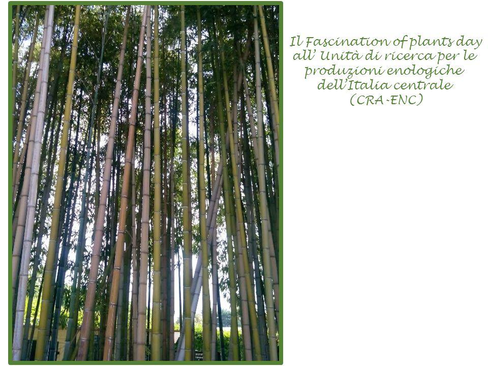Il Fascination of plants day all' Unità di ricerca per le produzioni enologiche dell'Italia centrale (CRA-ENC)