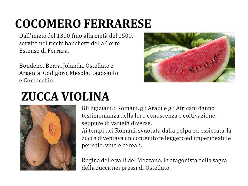 COCOMERO FERRARESE Dall'inizio del 1300 fino alla metà del 1500, servito nei ricchi banchetti della Corte Estense di Ferrara. Bondeno, Berra, Jolanda,