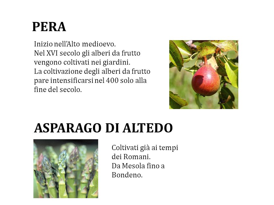 PERA Inizio nell Alto medioevo.Nel XVI secolo gli alberi da frutto vengono coltivati nei giardini.