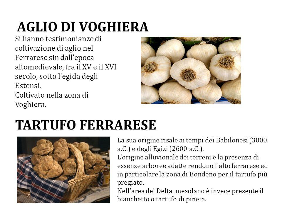 AGLIO DI VOGHIERA Si hanno testimonianze di coltivazione di aglio nel Ferrarese sin dall'epoca altomedievale, tra il XV e il XVI secolo, sotto l'egida degli Estensi.