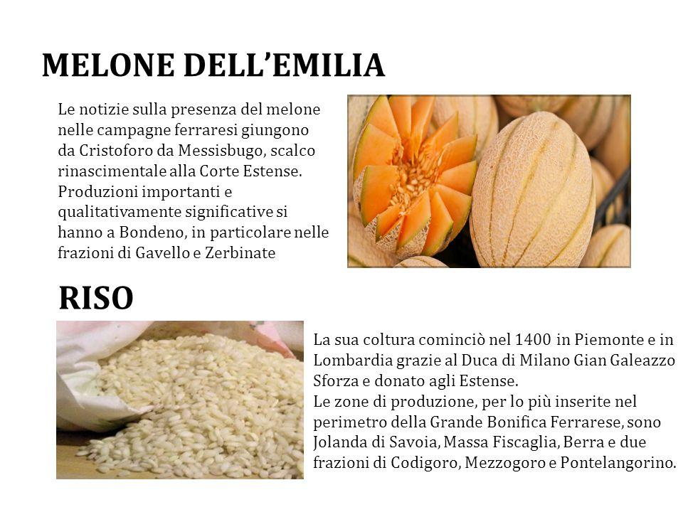 MELONE DELL'EMILIA Le notizie sulla presenza del melone nelle campagne ferraresi giungono da Cristoforo da Messisbugo, scalco rinascimentale alla Corte Estense.