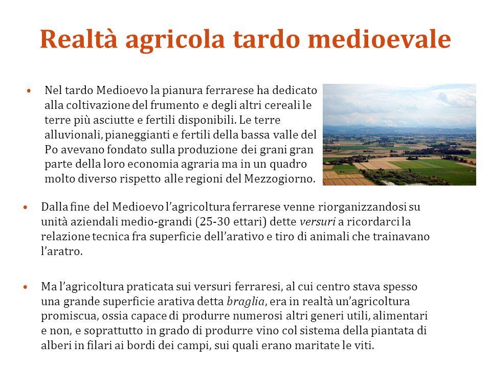 Realtà agricola tardo medioevale Nel tardo Medioevo la pianura ferrarese ha dedicato alla coltivazione del frumento e degli altri cereali le terre più asciutte e fertili disponibili.