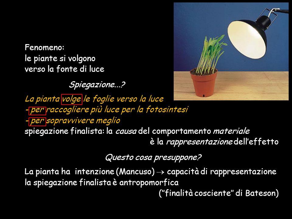 Fenomeno: le piante si volgono verso la fonte di luce Spiegazione...? La pianta volge le foglie verso la luce - per raccogliere più luce per la fotosi