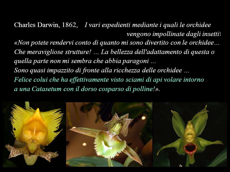 Charles Darwin, 1862, I vari espedienti mediante i quali le orchidee vengono impollinate dagli insetti : «Non potete rendervi conto di quanto mi sono