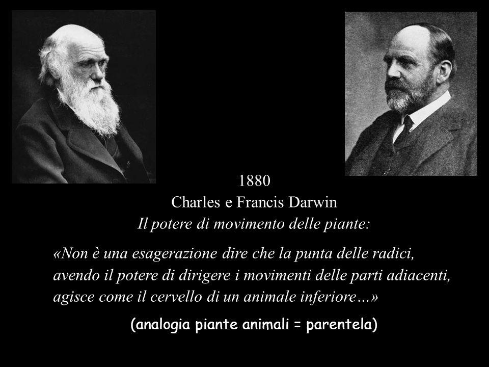 1880 Charles e Francis Darwin Il potere di movimento delle piante: «Non è una esagerazione dire che la punta delle radici, avendo il potere di diriger