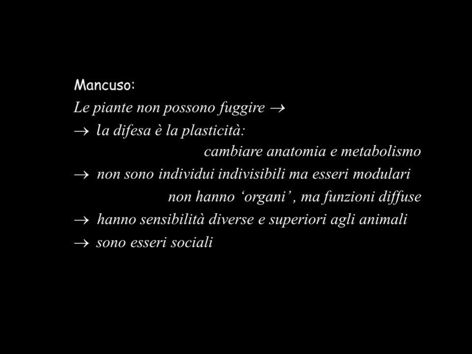 Mancuso: Certi movimenti richiedono coordinazioni cellulari «Forse diamo troppa importanza ai neuroni.