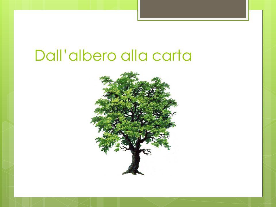Dall'albero alla carta