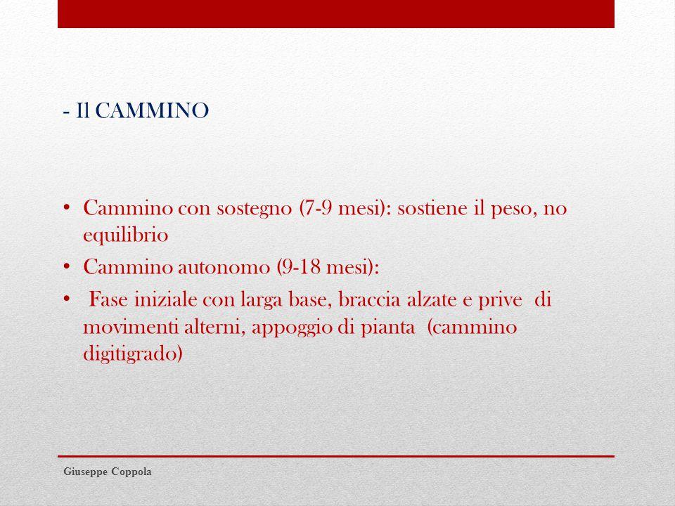 - Il CAMMINO Cammino con sostegno (7-9 mesi): sostiene il peso, no equilibrio Cammino autonomo (9-18 mesi): Fase iniziale con larga base, braccia alzate e prive di movimenti alterni, appoggio di pianta (cammino digitigrado) Giuseppe Coppola