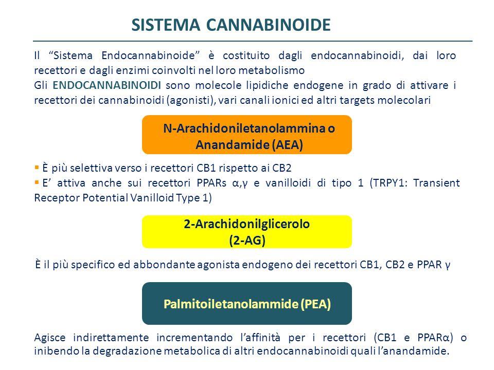 """SISTEMA CANNABINOIDE Il """"Sistema Endocannabinoide"""" è costituito dagli endocannabinoidi, dai loro recettori e dagli enzimi coinvolti nel loro metabolis"""