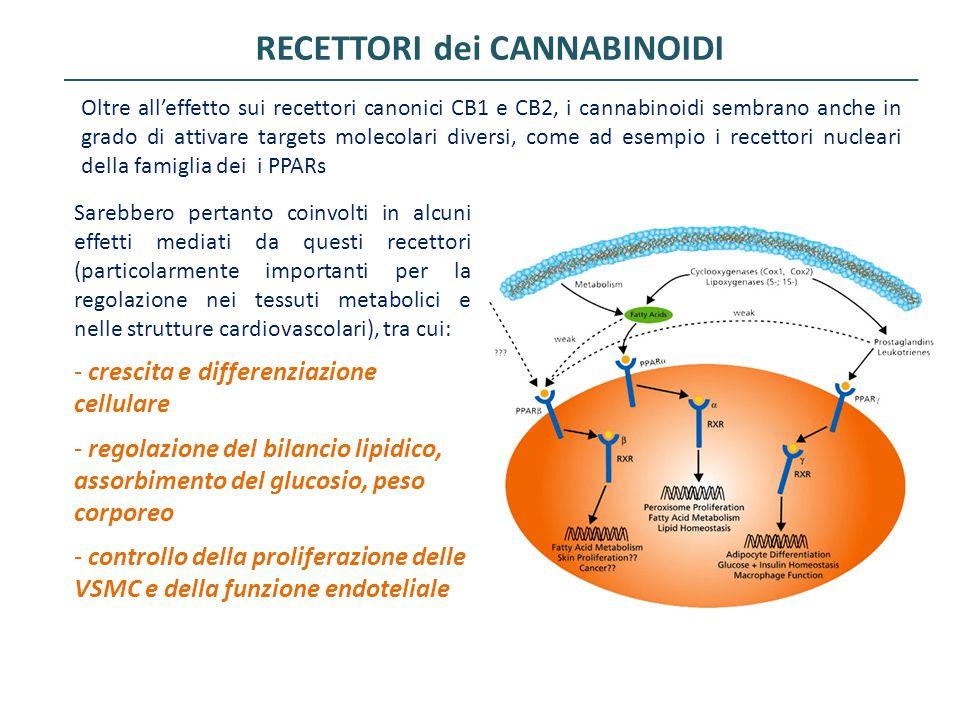 RECETTORI dei CANNABINOIDI Oltre all'effetto sui recettori canonici CB1 e CB2, i cannabinoidi sembrano anche in grado di attivare targets molecolari d
