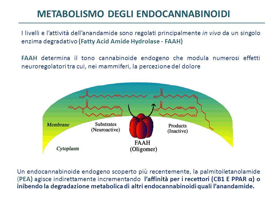 I livelli e l'attività dell'anandamide sono regolati principalmente in vivo da un singolo enzima degradativo (Fatty Acid Amide Hydrolase - FAAH) FAAH