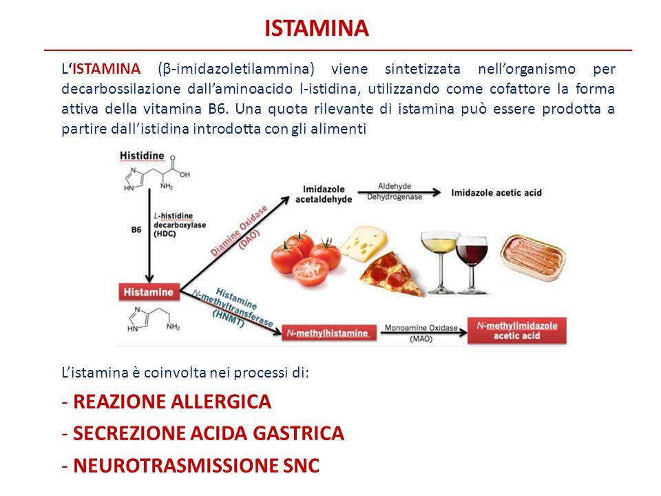 ISTAMINA L'ISTAMINA (β-imidazoletilammina) viene sintetizzata nell'organismo per decarbossilazione dall'aminoacido l-istidina, utilizzando come cofatt
