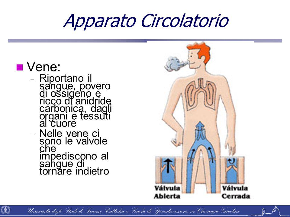 Università degli Studi di Firenze, Cattedra e Scuola di Specializzazione in Chirurgia Vascolare Apparato Circolatorio Vene:  Riportano il sangue, pov