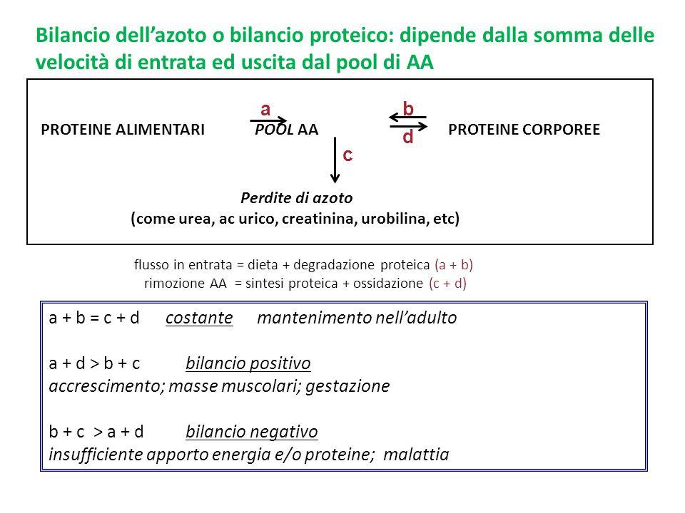 a + b = c + d costante mantenimento nell'adulto a + d > b + cbilancio positivo accrescimento; masse muscolari; gestazione b + c > a + d bilancio negat