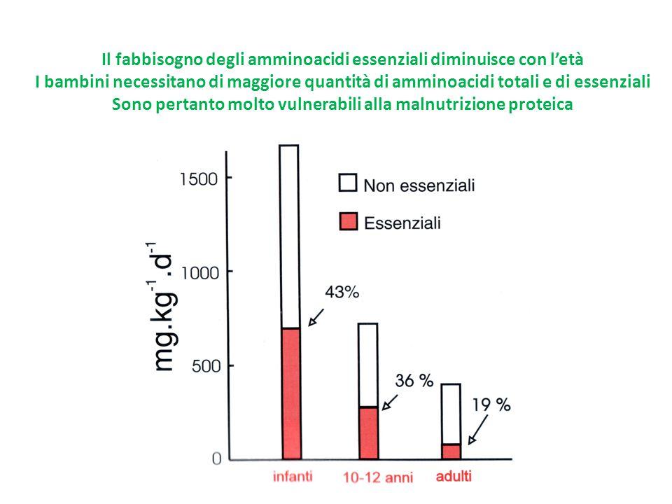 Il fabbisogno degli amminoacidi essenziali diminuisce con l'età I bambini necessitano di maggiore quantità di amminoacidi totali e di essenziali Sono