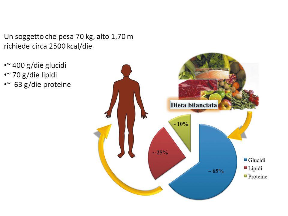 Un soggetto che pesa 70 kg, alto 1,70 m richiede circa 2500 kcal/die ~ 400 g/die glucidi ~ 70 g/die lipidi ~ 63 g/die proteine