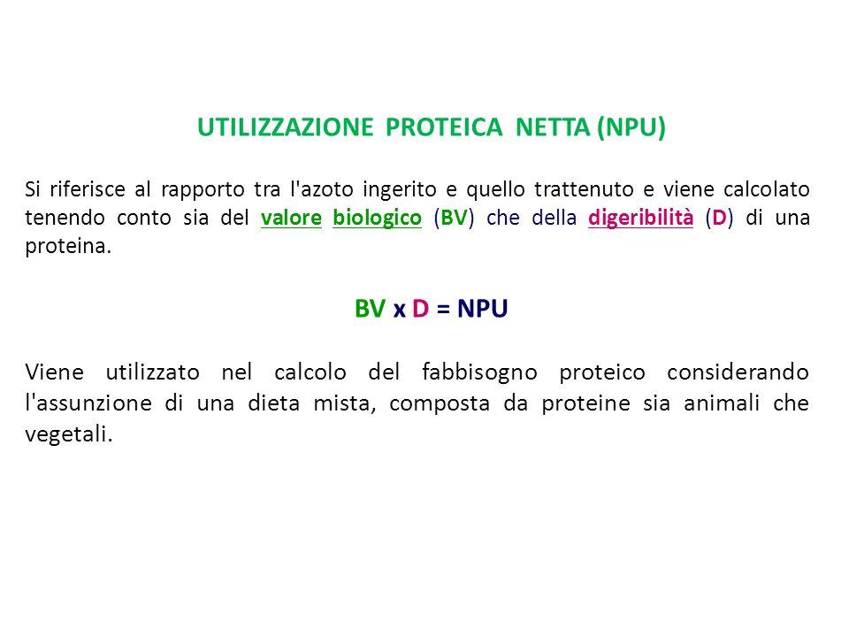 UTILIZZAZIONE PROTEICA NETTA (NPU) Si riferisce al rapporto tra l'azoto ingerito e quello trattenuto e viene calcolato tenendo conto sia del valore bi