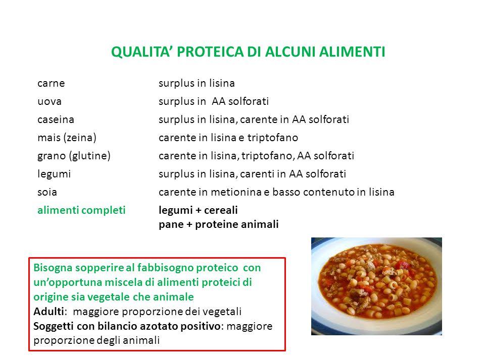 QUALITA' PROTEICA DI ALCUNI ALIMENTI carne surplus in lisina uova surplus in AA solforati caseina surplus in lisina, carente in AA solforati mais (zei