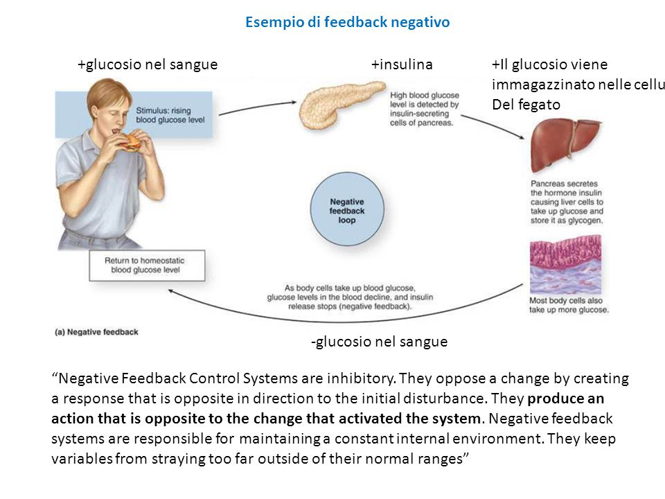 "Esempio di feedback negativo ""Negative Feedback Control Systems are inhibitory. They oppose a change by creating a response that is opposite in direct"