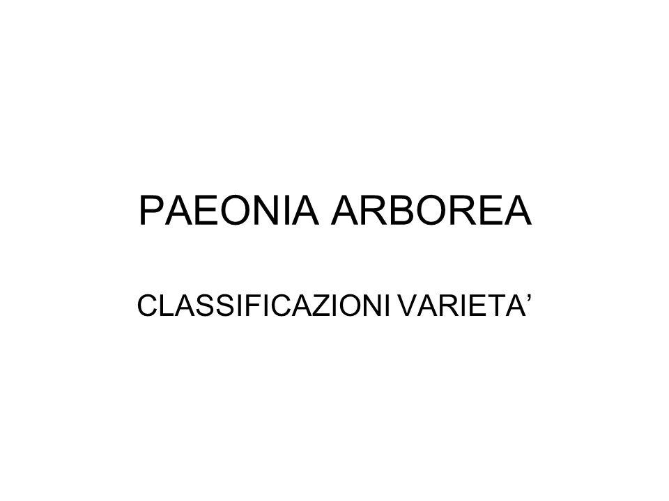 PAEONIA ARBOREA CLASSIFICAZIONI VARIETA'