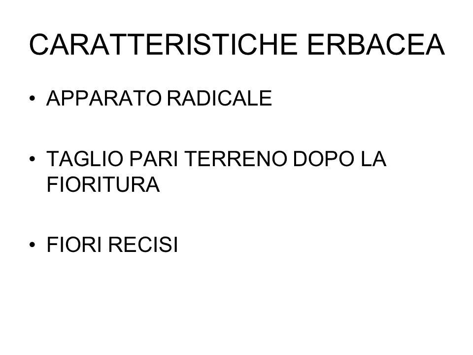 CARATTERISTICHE ERBACEA APPARATO RADICALE TAGLIO PARI TERRENO DOPO LA FIORITURA FIORI RECISI