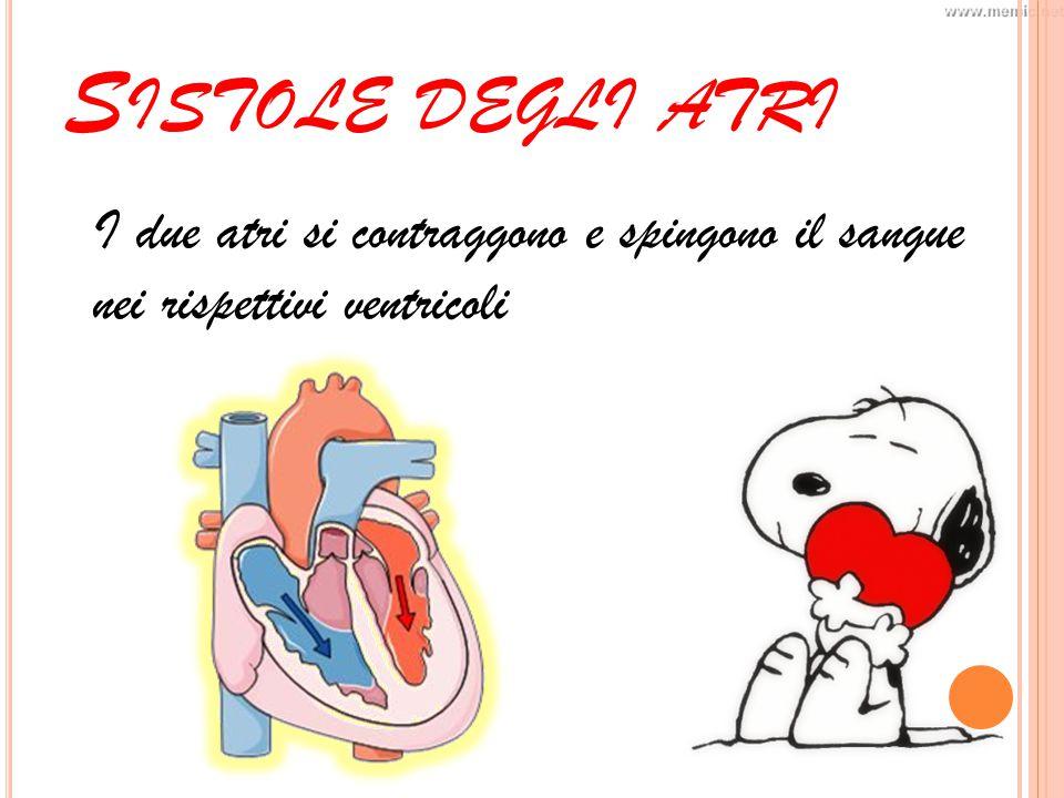 S ISTOLE DEGLI ATRI I due atri si contraggono e spingono il sangue nei rispettivi ventricoli