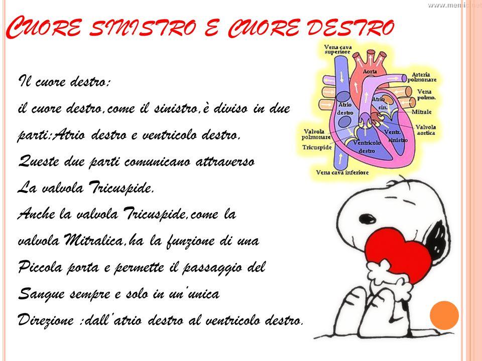 C UORE SINISTRO E CUORE DESTRO Il cuore destro: il cuore destro,come il sinistro,è diviso in due parti:Atrio destro e ventricolo destro.