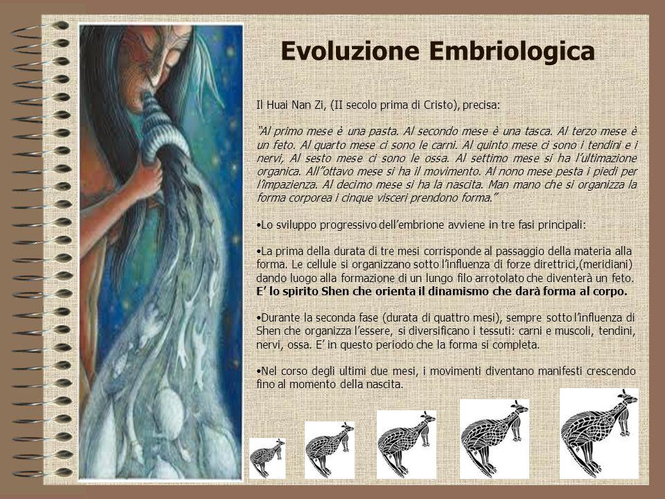 """Evoluzione Embriologica Il Huai Nan Zi, (II secolo prima di Cristo), precisa: """"Al primo mese è una pasta. Al secondo mese è una tasca. Al terzo mese è"""